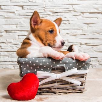 Zabawny czerwony szczeniak podłość w koszu z czerwonym sercem na walentynki, kartkę z życzeniami