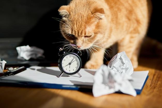 Zabawny figlarny kot bawiący się zmiętymi papierowymi kulkami na biurku w słońcu, domowe miejsce pracy.