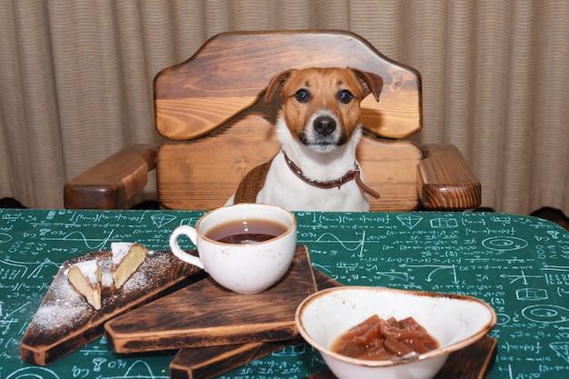 Zabawny głodny pies jack russell w kuchni, jedzenie i picie herbaty na stole