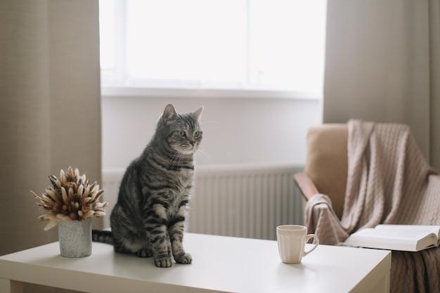 Zabawny kot w słonecznym przytulnym salonie w domu