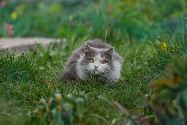 Zabawny kot zjada trawę