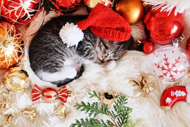 Zabawny kotek śpi w jasnych czerwonych dekoracjach świątecznych