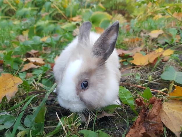 Zabawny królik patrząc w kamerę