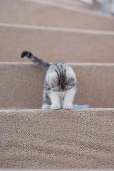Zabawny mały szary i biały kotek siedzi na miękkich schodach w przytulnym domu