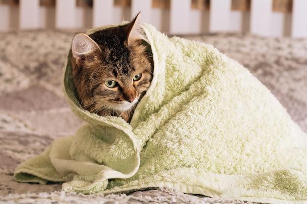 Zabawny mokry brązowy pręgowany słodki kociak po kąpieli owinięty w zielony ręcznik