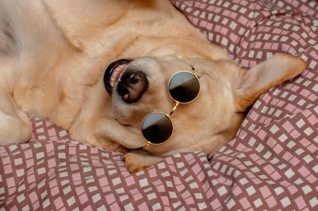 Zabawny pies â€â€uśmiechający się leżąc w okularach.