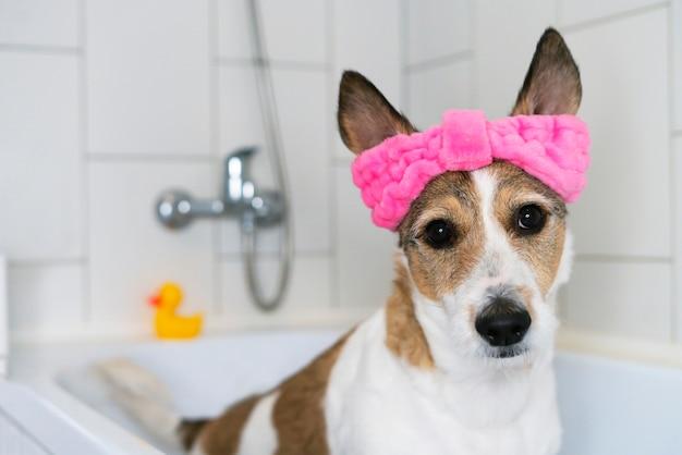 Zabawny pies w łazience zwierzę biorące prysznic higiena zwierząt