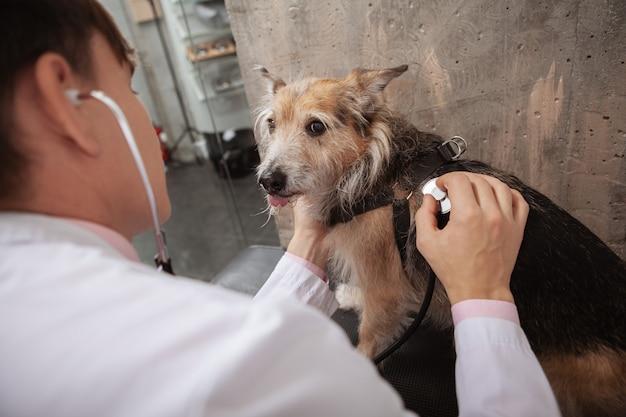 Zabawny pies ze schroniska pokazujący język, patrząc do kamery podczas badania lekarskiego w klinice weterynaryjnej