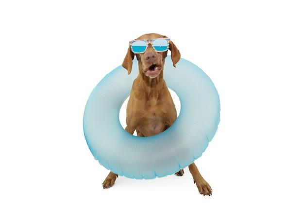 Zabawny piesek wyjeżdżający na letnie wakacje z nadmuchiwanym niebieskim pierścieniem. na białym tle
