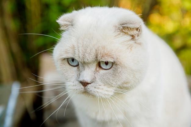 Zabawny portret krótkowłosy biały kotek domowy na tle zielonym podwórku