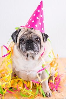 Zabawny stary mops pies z karnawałowymi lub ogólnymi akcesoriami do uroczystości na nim - koncepcja sylwestrowa i świąteczna impreza