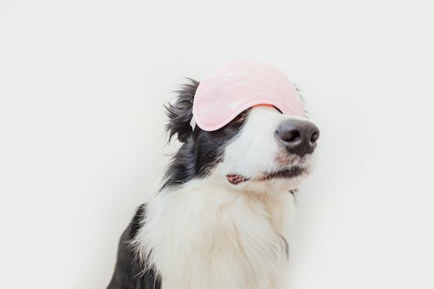 Zabawny szczeniak pies border collie z maską do spania na białym tle