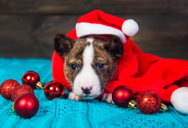 Zabawny szczeniak podłość w czapce mikołaja siedzi z czerwonymi bombkami. zimowe święta