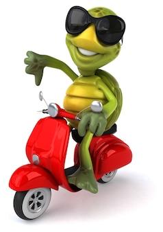 Zabawny żółw