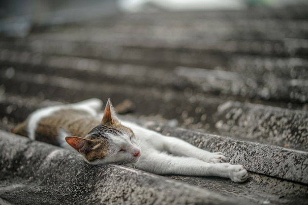 Zabłąkany kot śpi na dachu domu