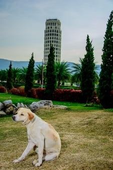 Zabłąkany pies w atrakcjach turystycznych.