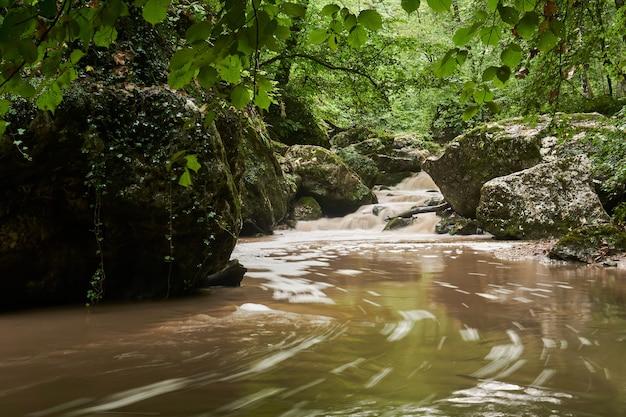 Zabłocony strumień po deszczu w subtropikalnym lesie, woda rozmywa się w ruchu