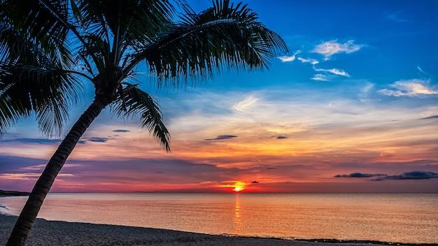 Zachód słońca i natura palmy.