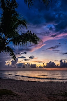 Zachód słońca i palmy - tło natura.