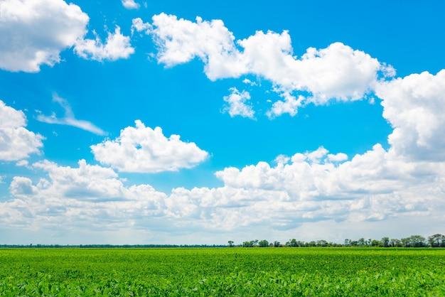 Zachód słońca i pole zielonej świeżej trawy pod błękitnym niebem.