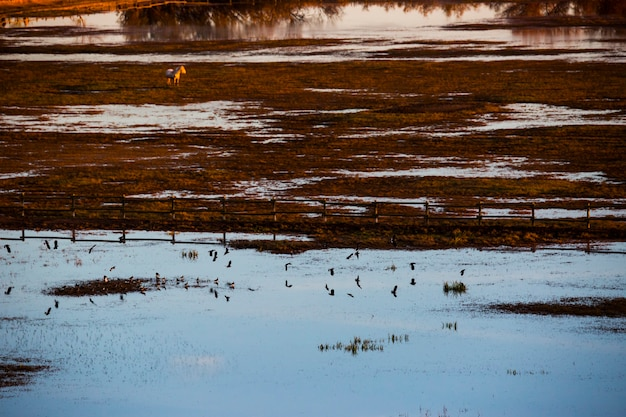 Zachód słońca i ptaki w rezerwacie przyrody aiguamolls de l'emporda, hiszpania.