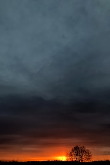 Zachód słońca jarzy się na horyzoncie z samotnym drzewnym naturalnym tłem
