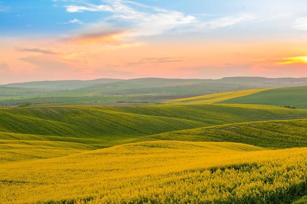 Zachód słońca nad kwitnącymi polami rzepaku
