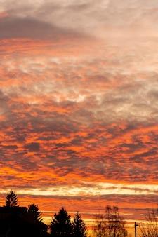 Zachód słońca niebo z drzewami