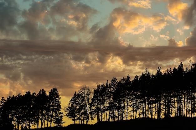 Zachód słońca. sylwetka drzew. chmury nad panoramą wieczornych koszulek.