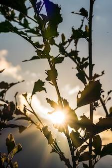 Zachód słońca w górach i wzgórzach w itaipava podświetlenie na pierwszym planie rośliny selektywne skupienie