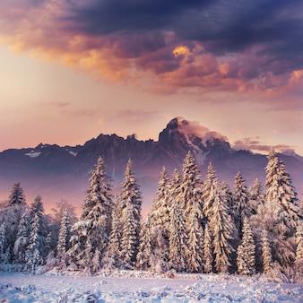Zachód słońca w górach zimą. karpackie, ukraina, europa