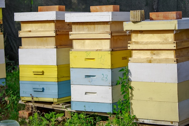 Zachód słońca w pasiece. pszczoły miodne w locie. otwórz wejście do żółtego ula.