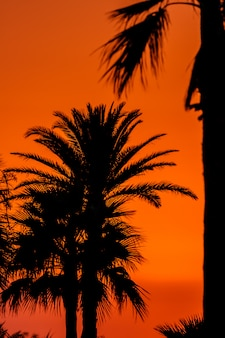 Zachód słońca w pobliżu plaży san fernando, cadiz, hiszpania
