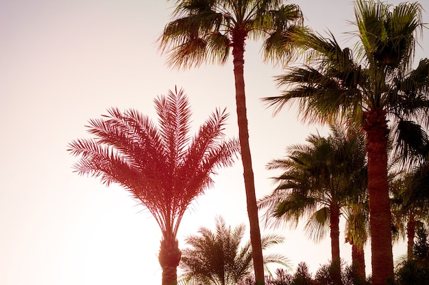 Zachód słońca widok panorama krajobraz natura morze czerwone w dahab egipt półwysep synaj