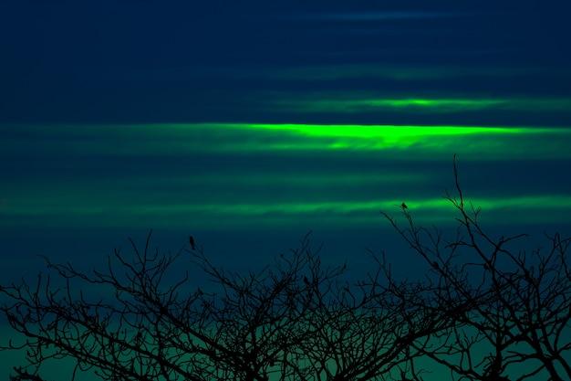 Zachód słońca z powrotem na sylwetce ptaki wiszące na suchym drzewie świecą zieloną chmurą na niebie