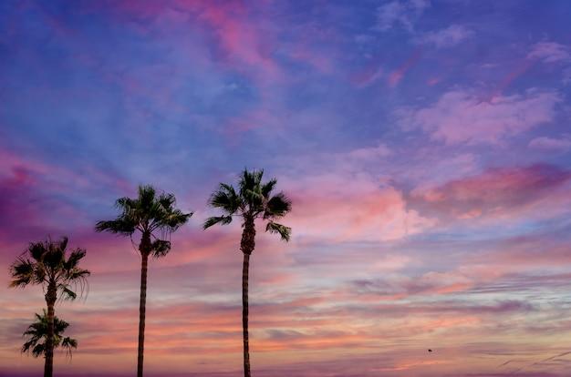 Zachód słońca z wysokimi palmami kalifornii