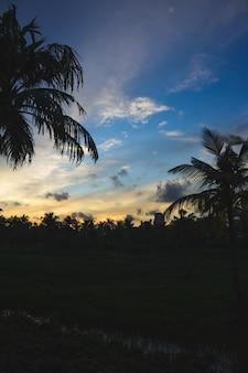 Zachód słońca za sylwetką palm i budynków