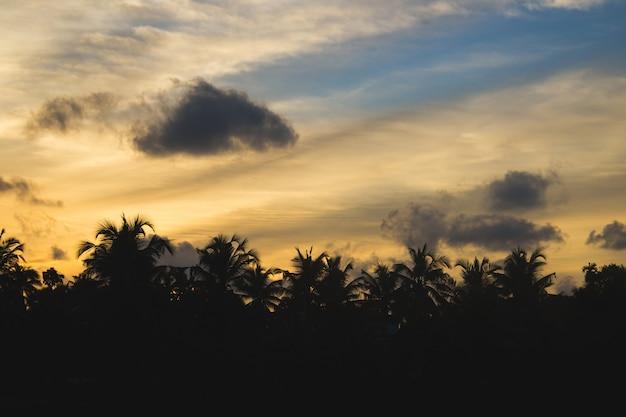 Zachód słońca za sylwetką palmy