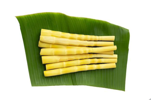 Zachowane pędy bambusa na liściu bananowca