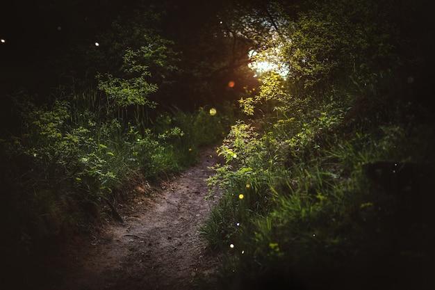 Zaczarowany las, magiczne zioła. zielone rośliny czarownic, mistyczny las