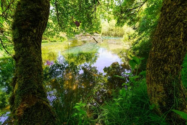 Zaczarowany las z zielonymi roślinami i rzeka z odbiciami.