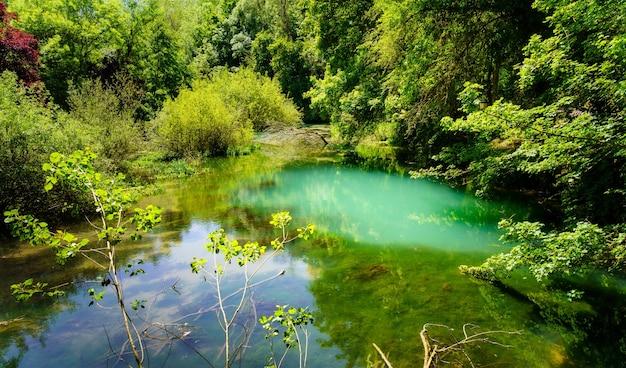 Zaczarowany zielony zakątek lasu z rzeką z odbiciami w wodzie.
