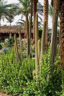Zadbany park z palmami i kaktusami.
