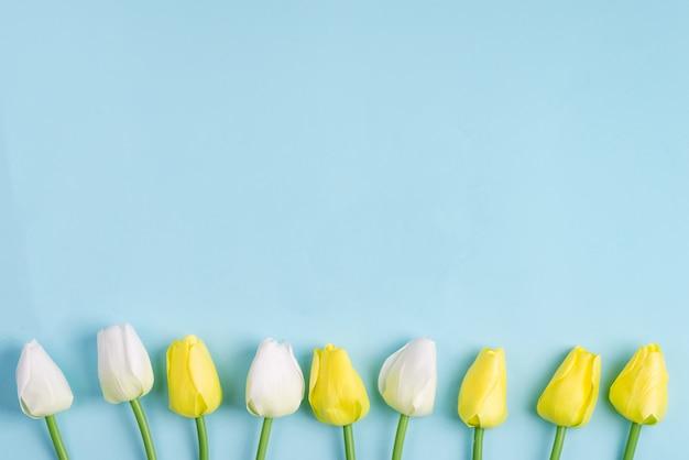 Zadziwiający wiosna tulipan kwitnie na błękitnym tle, mieszkanie kłaść z kopii przestrzenią