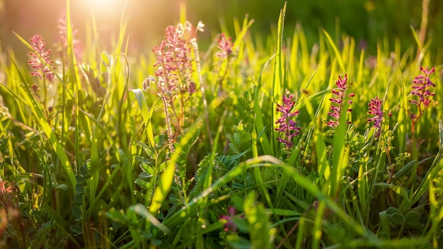 Zadzwoń do przyrody z zieloną trawą i kwiatami