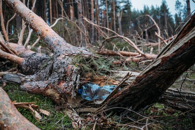 Zagadnienia, problemy środowiskowe. plastikowa butelka w pniu powalonego drzewa sosnowego. gratka w sosnowym lesie. obrażenia od burzy. powalone drzewa w lesie iglastym po silnym wietrze huraganu.