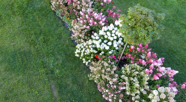 Zagospodarowanie terenu, klomb z kwitnącymi kolorowymi hortensjami na zielonej trawie.