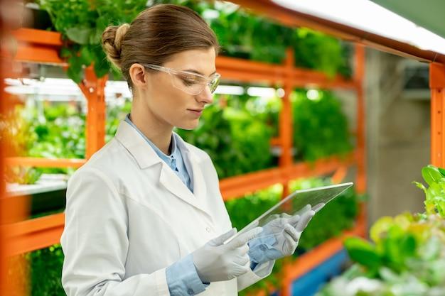 Zajęty młody inżynier rolnictwa z kokem do włosów używający szklistego panelu interaktywnego podczas analizy wzrostu roślin na pionowej farmie