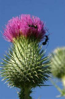 Zajęty mrówki