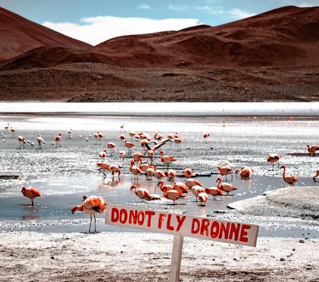 Zakaz lotu dronem biały znak na słonecznej lagunie z flamingami